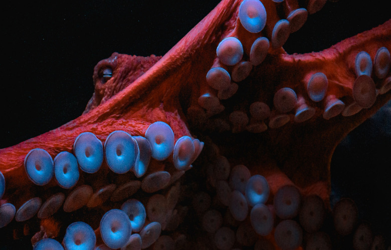 Le Temple du Present – Solo for an Octopus